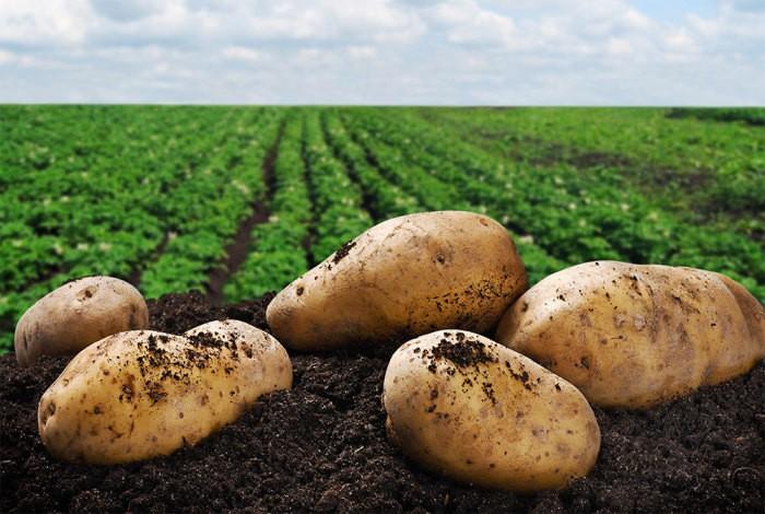 Законотворцы заставят платить за картошку на участке и штрафовать за свои семена