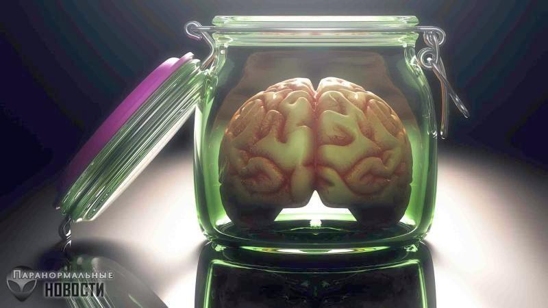 «Уверяем вас, оно не думает»: Ученые вырастили мини-мозг и наблюдали у него активность нейронов - Паранормальные новости