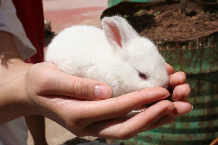 Характеристика и совместимость людей, родившихся в год Кролика