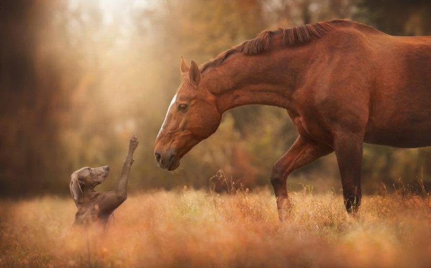 Характеристика и совместимость людей, родившихся в год Лошади