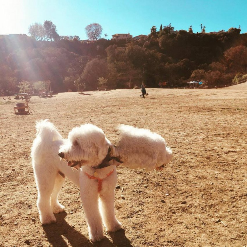 10 панорамных фотографий, которые превратили собак в инопланетян