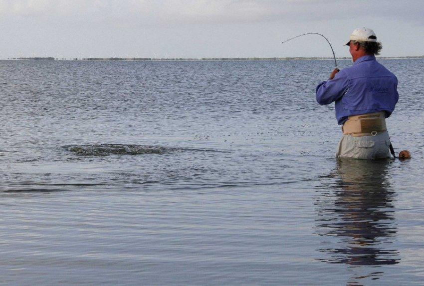 Плотоядные бактерии стали появляться в ранее незатронутых водах залива Делавэр