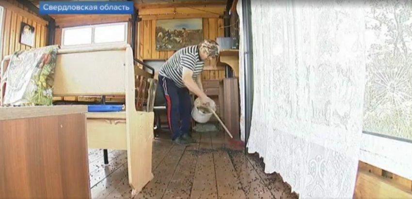 Мух-апокалипсис обрушился на деревню в Свердловской области