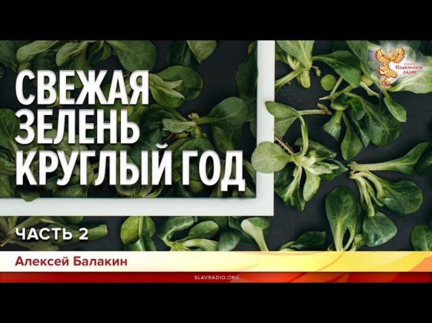 Свежая зелень круглый год. Алексей Балакин. Часть 2