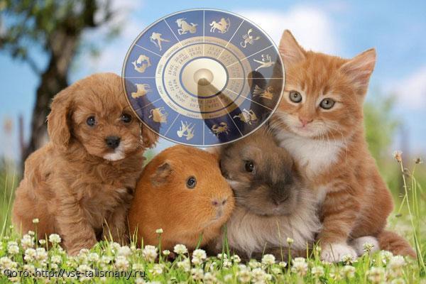 Самые идеальные домашние питомцы для разных знаков Зодиака