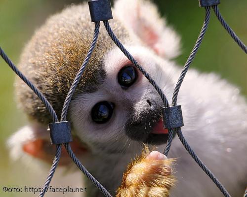 Подборка фотографий с виду милых, но очень опасных животных