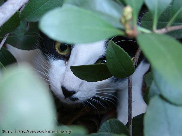 10 фото, доказывающих, что коты захватывают мир