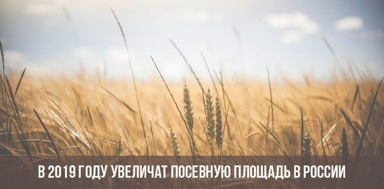В 2019 году увеличат посевную площадь в России