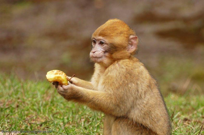 Ученые из США доказали любовь древних приматов к алкоголю