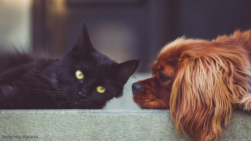 Ученые объяснили любовь людей к кошкам и собакам