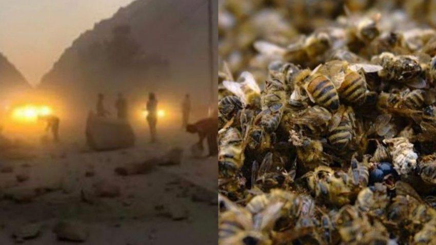 Пчелы в Калифорнии чувствуют приближение катастрофы: странное поведение насекомых