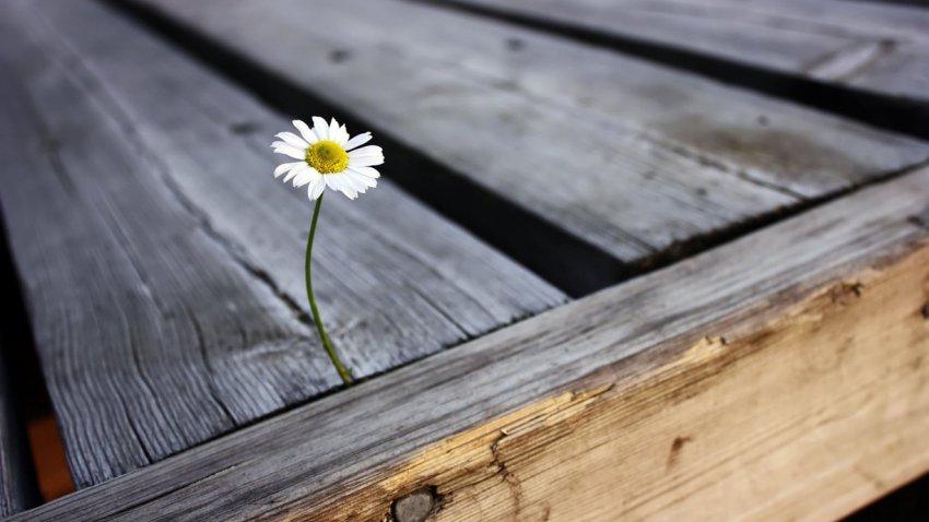 Настоящие везунчики: 4 знака Зодиака, для которых август 2019 станет точкой отсчета новой счастливой жизни
