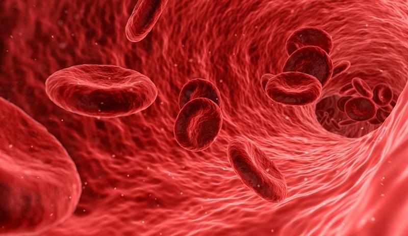 Ученые нашли способ определить по анализу крови, умрет ли человек в ближайшие 10 лет