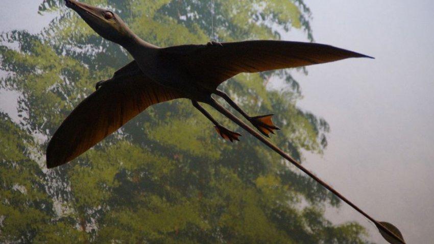 Живой птерозавр в наши дни: семья из Чикаго увидела в небе доисторическое существо