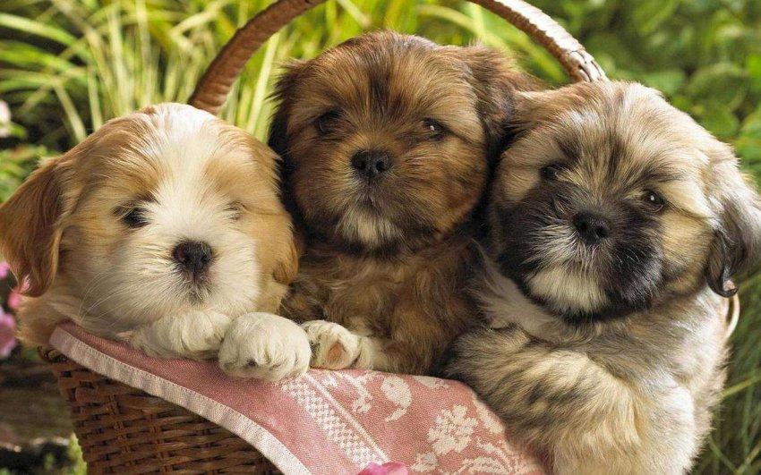 Самые таинственные и мистические породы собак: топ 5 загадочных питомцев
