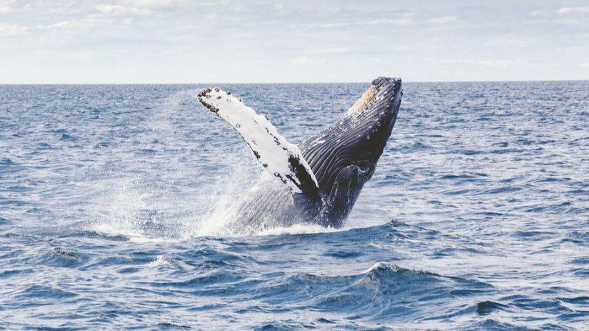 Миллионы морских созданий в опасности: в Тихом океане образовалась зона с экстремальной температурой