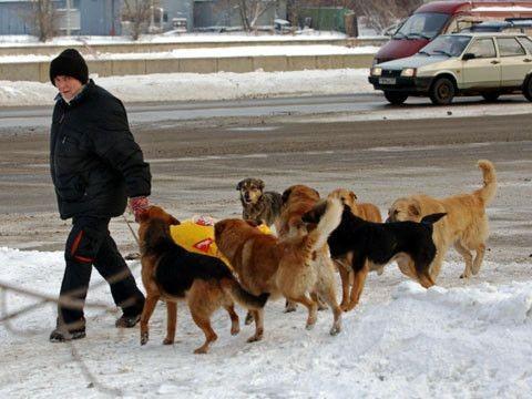 В одном из городов Карелии собаки с желтыми метками нападают на детей