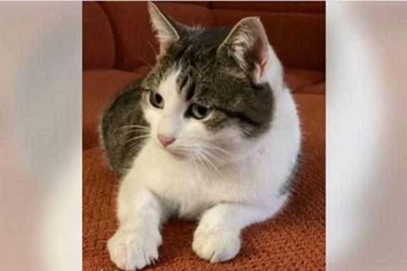 Новороссиец выставил на продажу кошку с магическими способностями за 20 млн. рублей