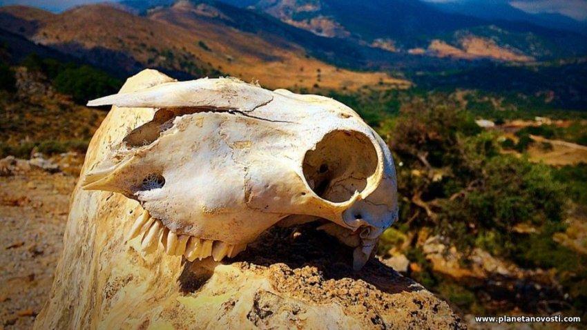 ООН хочет предотвратить шестое массовое вымирание на Земле