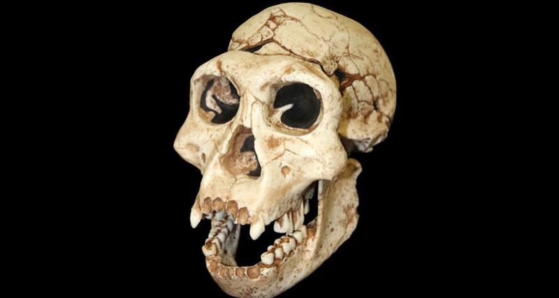 Ученые обнаружили неизвестный науке вид древнего человека