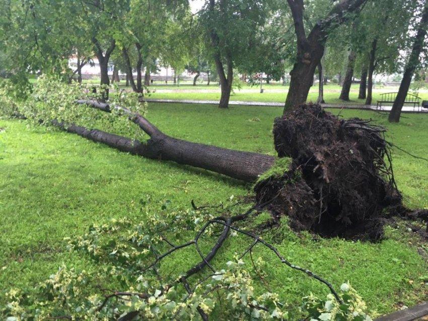 Упавшее дерево в Гурьевске убило школьницу 12 марта 2020 года