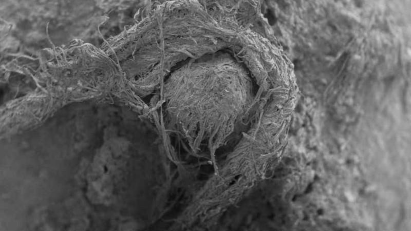 Неандертальцы умели шить одежду: ученые нашли нить возрастом 50 тысяч лет