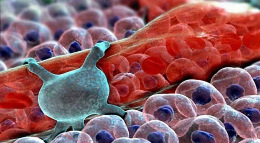 Микробиом клеток нашего организма в 3D-анимации