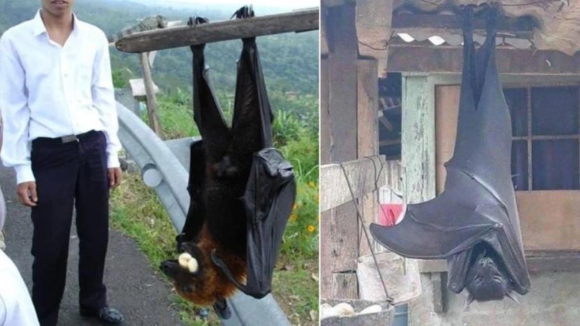 Фото с огромной летучей мышью напугало людей: автор снимка объяснил, что это на самом деле