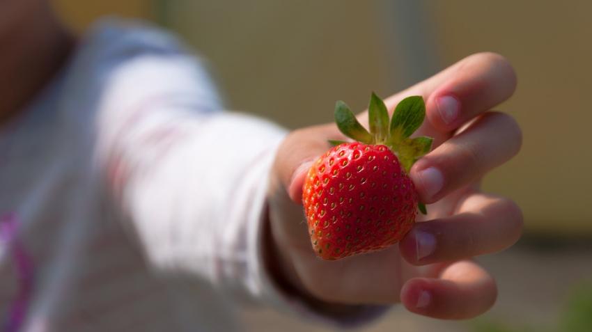 Названа популярная ягода, которая может вызывать бесплодие и рак