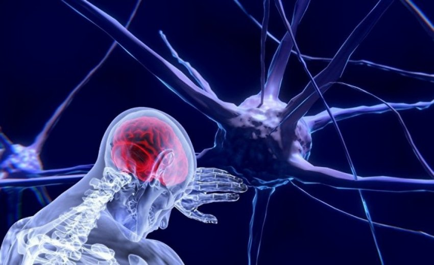 Интеллект: от генетики до «проводов» и «процессора» человеческого мозга