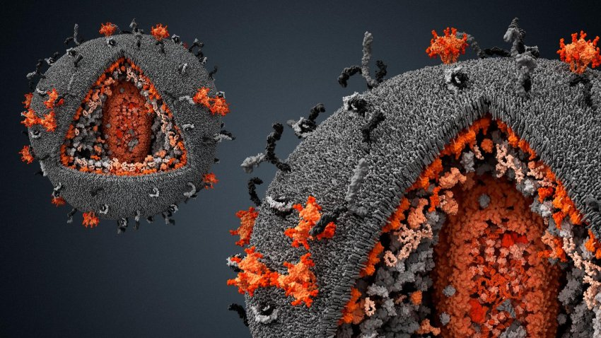 Не передается от человека к человеку: Европу атаковал новый вирус
