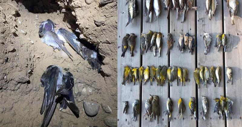 Названа причина массовой гибели птиц в США