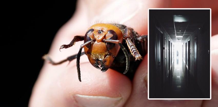 В Португалии от укуса азиатского шершня умер 70-летний мужчина