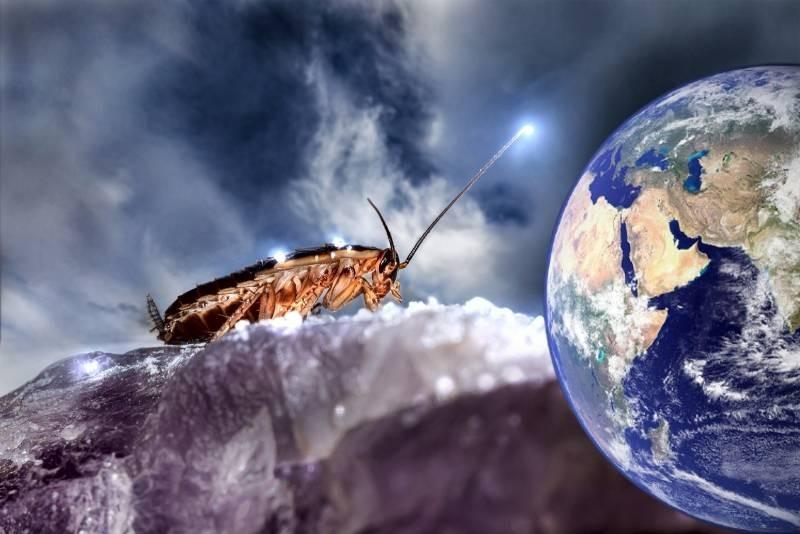 В феврале 2021 года в России будет нашествие тараканов