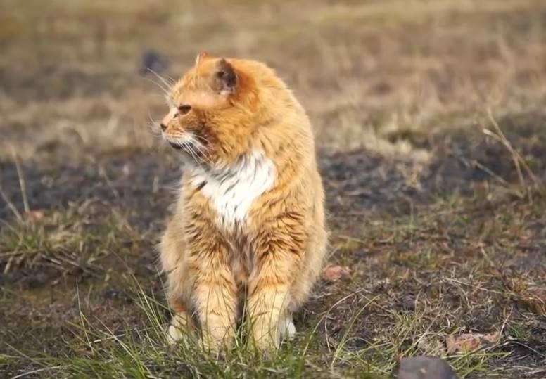 Почему на Шпицбергене нельзя держать кошек, а также другие запреты местности