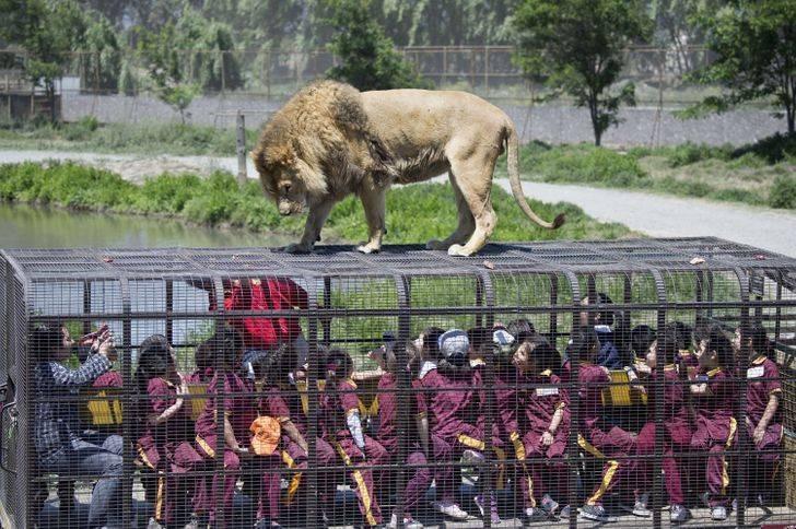 Зоопарк наоборот: как люди сидят в клетке, а животные разгуливают на свободе