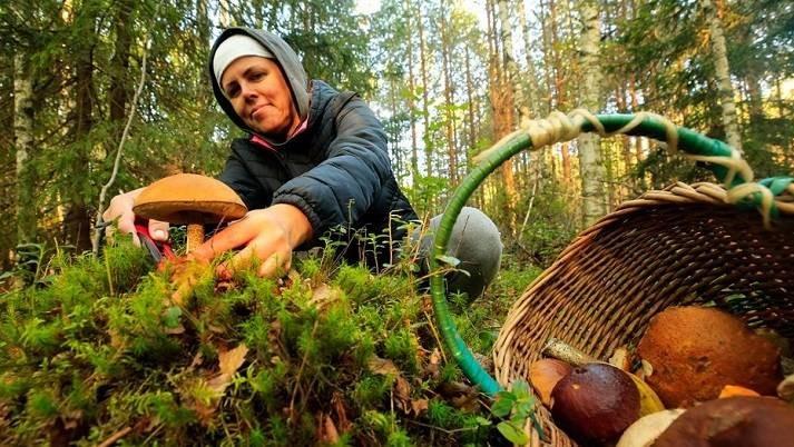 Правда ли, что финны не собирают грибы из-за древних традиций и легенд