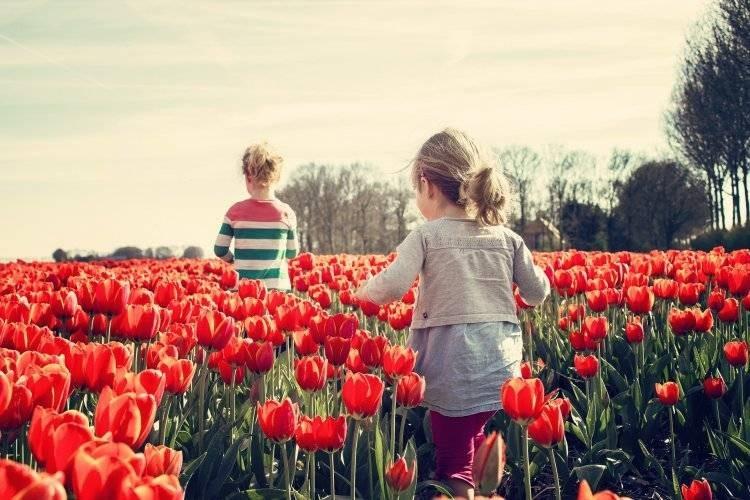 Когда состоится парад тюльпанов в Никитском ботаническом саду