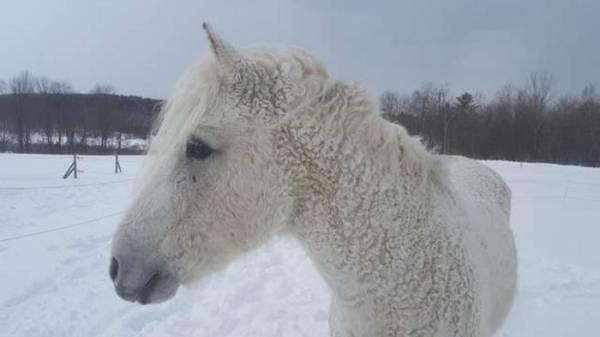 Зачем нужно брить наголо лошадей