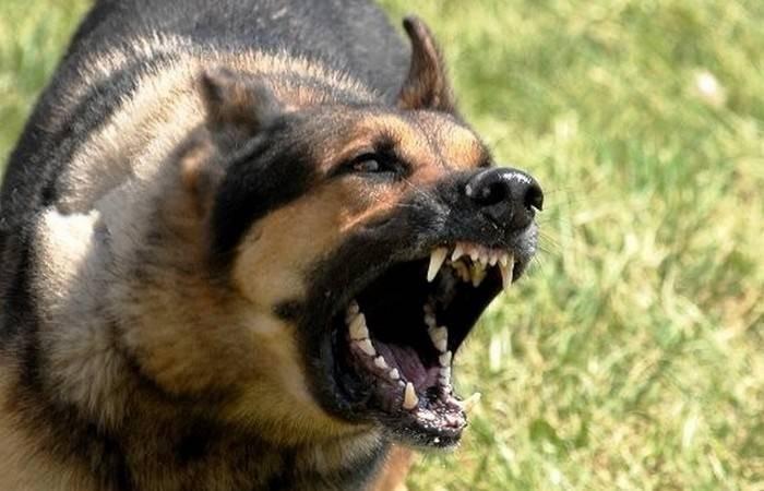 Почему возник миф, что в полнолуние люди становятся агрессивными