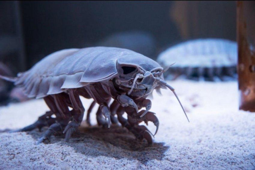 10 странных и необычных живых существ