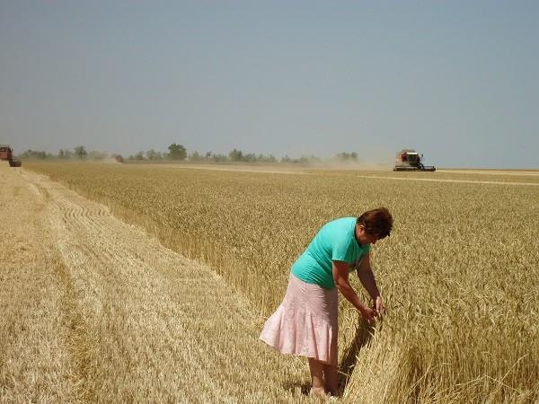 «Единая Россия» инициировала сохранение доплат к пенсиям работников сельского хозяйства со стажем более 30 лет