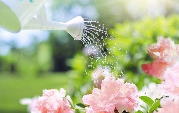 Благоприятные дни в июне по лунному календарю для садоводов и огородников