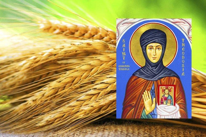 Народные приметы 11, в день Феодосии Колосятницы