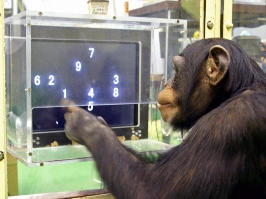 Есть ли у животных сознание?