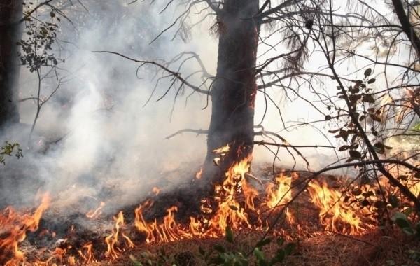 Возросло число погибших в результате лесных пожаров в Турции