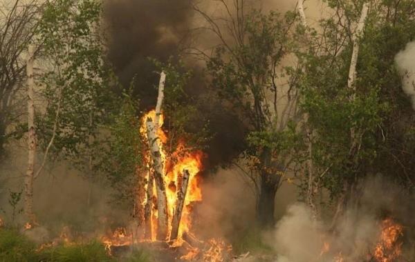 В Якутии за сутки ликвидировано 10 лесных пожаров