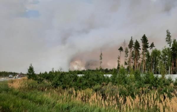 Спасатели наращивают силы для тушения лесных пожаров в Марий Эл