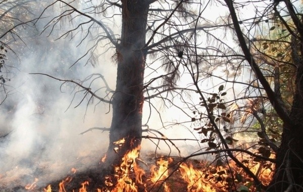Площадь лесных пожаров в Марий Эл резко возросла