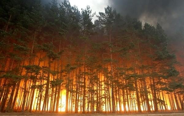 В Марий Эл продолжаются работы по тушению лесных пожаров